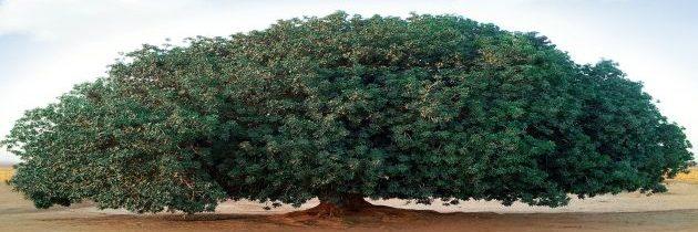 Porijeklo i porodično stablo